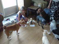 dog party 3.JPG